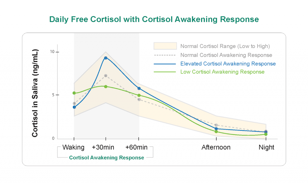 Daily Free Cortisol Graphic